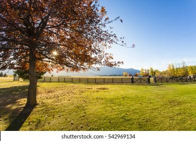 Farm in Autumn , New Zealand