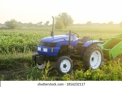 A farm blue tractor stands on the field. Breakage during harvesting. Maintenance and repair of equipment and machines. Farming and farmland. Harvesting potatoes in autumn. Countryside.