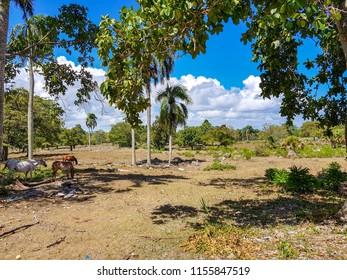 Farm in the Caribbean