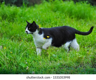 Farm cat out chasing mice in the field