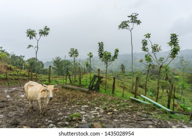 Farm and cow in mud, fog, and clouds