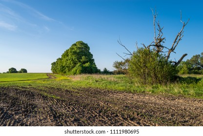 Farm field with clean blue sky