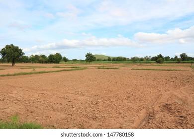 Farm Field in Crop on a Sunny Day.