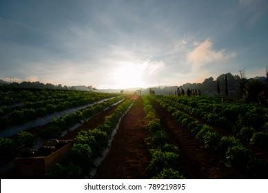 Farm field in the rural area of Guatemala.