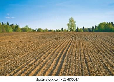 Farm field in spring
