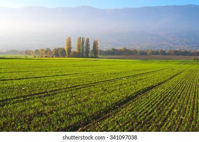 Farm field tillage with fresh grass