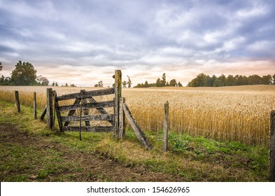 Farm Gate and entry to a Cornfield of Ripe Wheat, in Patagonia, Chile. High definition image.