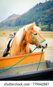 Farm horse in Kyoto supports tourism.