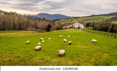 Farm house of the Basque Country with a flock of sheep on a cloudy day, Bermeo