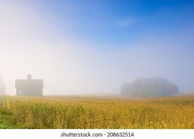 Farm house and an island of trees in a foggy early morning corn field, Stowe Vermont, USA