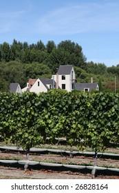 A farm house in a vineyard