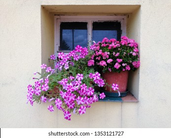Farm house window with pink flowers, Veneto, Itlay