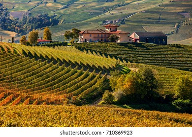 Farm houses and autumnal vineyards on the hills in Piedmont, Northern Italy.