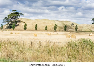 Farm land  with rolls of cut  and baled hay with dry low hills and clouds in sky forming backdrop to field