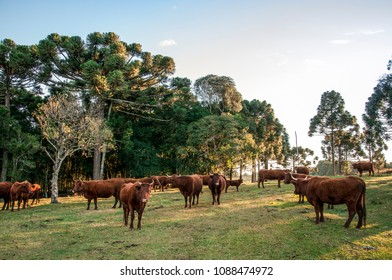 Farm landscape and cattle