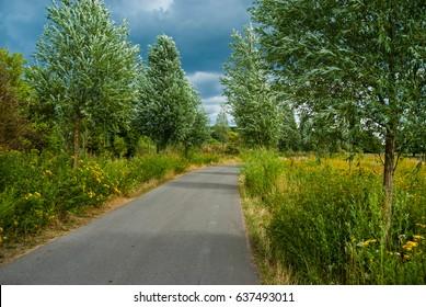 Farm lane green tree leafs summer storm