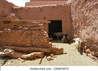 Farm Life at Kasbah Ait Ben Haddou near Ouarzazate in the Atlas Mountains of Morocco. UNESCO World Heritage Site since 1987. Sheep, goats, roosters inside the kasbah.