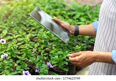 Farm management with tablet. African american girl with smart watch and device, checks quality of plants in greenhouse, sun flare, cropped