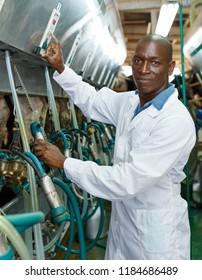 Farm milkmaid man in bathrobe in barn working with automatical cow milking machines