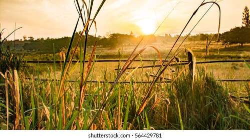 farm in morning time
