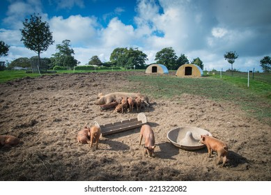 Farm with pig and sky in background