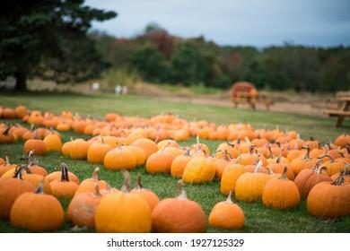 Farm portraits of pumpkin fields