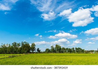 farm rice and clouds sky landscape