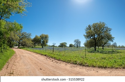 Farm road along a pasture of Bluebonnets in central Texas