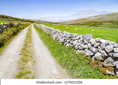 Farm road and sheeps in Burren way trail, Ballyvaughan, Clare, Ireland