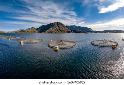 Pesca de salmón de piscifactoría en Noruega. Noruega es el mayor productor mundial de salmón de piscifactoría, con más de un millón de toneladas producidas cada año.