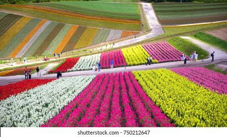 Farm Shed Scenery in Biei-ch?, Hokkaido Prefecture, Landscape of beautiful Japan Nature.