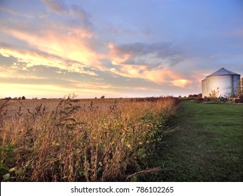 Farm with Soybean Field and Silos at Sunset