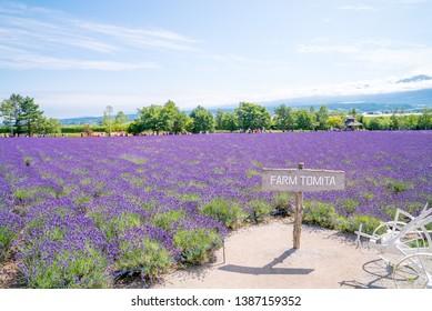 Farm Tomita in Hokkaido_7,July,2018 : Entrance Lavender fields in Farm Tomita, Furano, Hokkaido, Japan