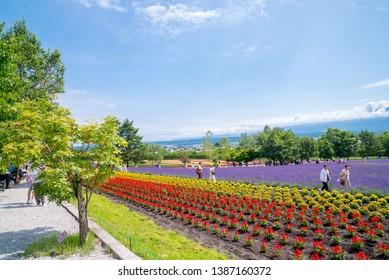 Farm Tomita in Hokkaido_7,July,2018 : Lavender fields&Flowers in Farm Tomita, Furano, Hokkaido, Japan