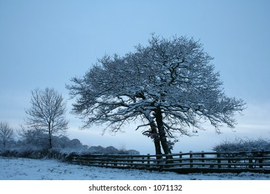 farm tree, england, northumberland