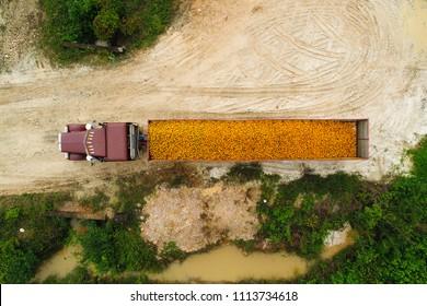 Farm truck full of oranges