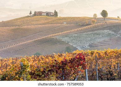 Farm winery vineyard in the Langhe region, Piedmont, Italy