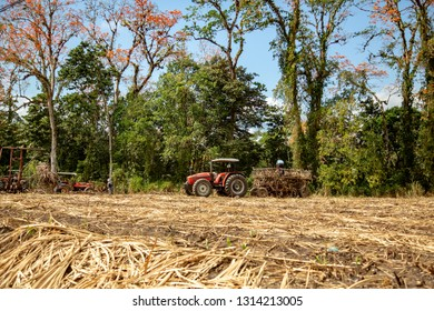 Farm workers in a sugar can field loading recently cut sugar can on to trailers for transport to a refinery near La Suiza, Costa Rica