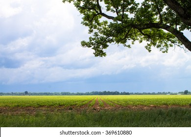 Farmed field in the country with approaching storm clouds in the distance, big sky with tree branch in the foreground