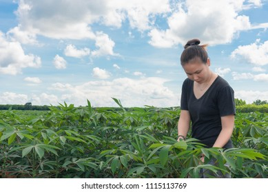 farmer with achievements Success with Cassava Planting