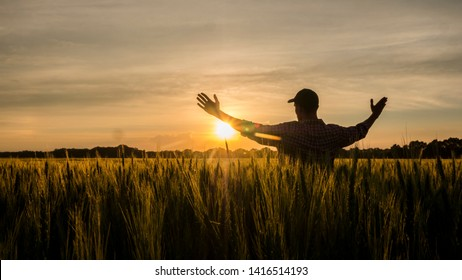 Farmer admires his wheat field, raised his hands up towards the sun