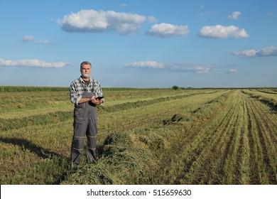 Landwirt oder Agronom untersuchen Kleeblatt nach der Ernte mit Tablette