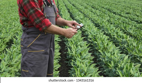 Farmer or agronomist examining soy bean crop and plants in field using tablet