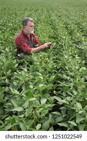 Farmer or agronomist in field examining green soybean plants using tablet