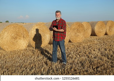 Farmer or agronomist in wheat field after harvest examining bale, rolled straw, using tablet