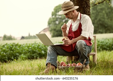 farmer in apple orchard browse his notebook computer