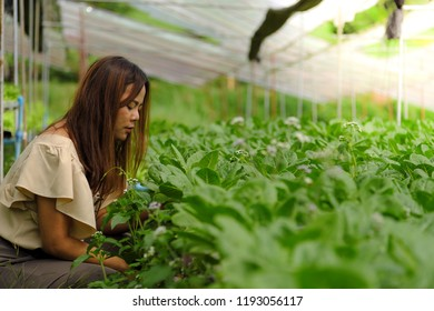 Farmer asian woman researching plant in hydroponic system farm. Agriculture and scientist concept