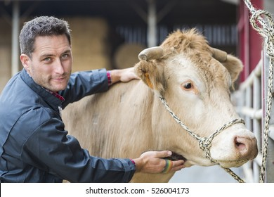 farmer in barn with a cow