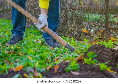 A farmer in a blue jeans, yellow cardigan and a working gloves digging up a garden bed while standing on a green grass with a lot of autumn foliage scattered around.