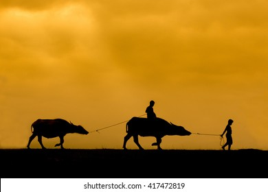Farmer boys and their buffaloes back home in sunset, Phatthalung Province, Thailand